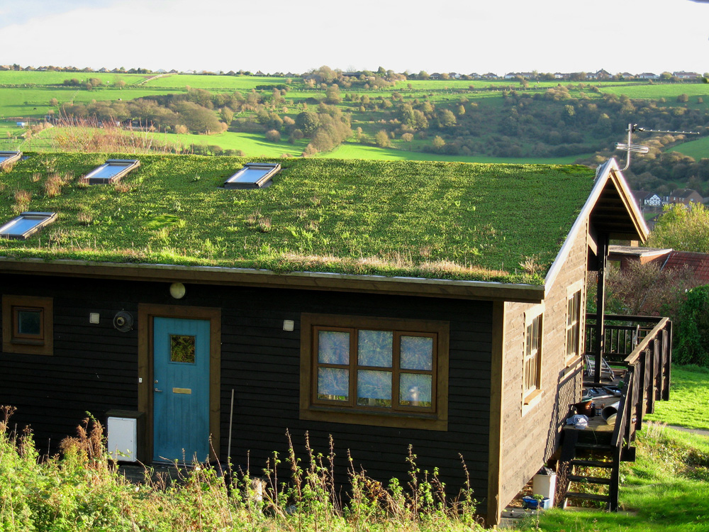 hoggs-green-roof