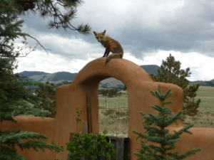Fox-on-Fence
