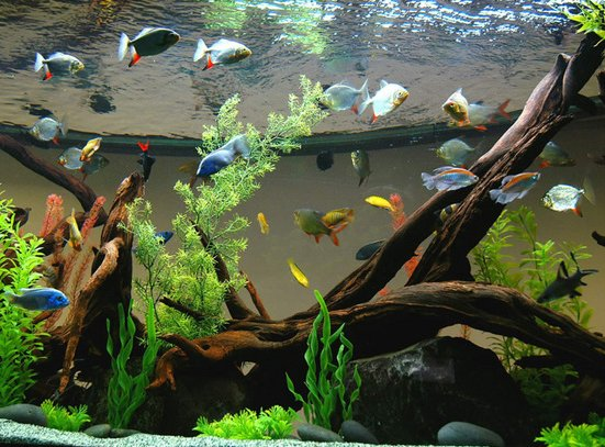 aquarian_small_fishes_16