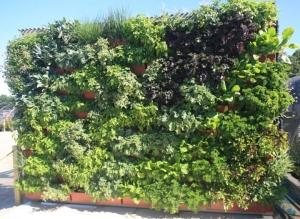 Hortech Edible Wall Garden livewall (1)