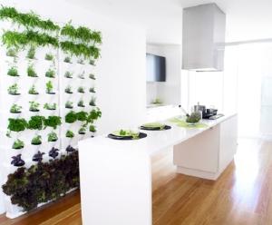 Minigarden-w-Herbs-Kitchen