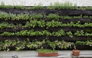 Wall-Herb-Garden-at-Le-Virtu
