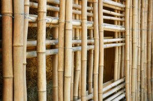 bamboo Building