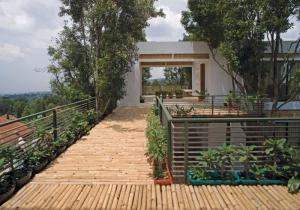 bamboo walkway (1)