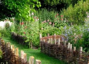 wattle in garden