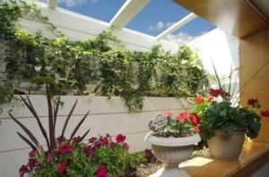 window-well-grow-space