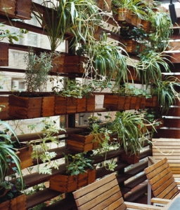 zizmor-house-exterior-plant-wall