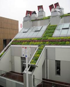ZED green roof