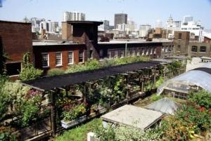 richmond_rooftop_garden2