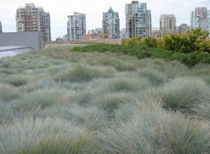 vancouver green roof