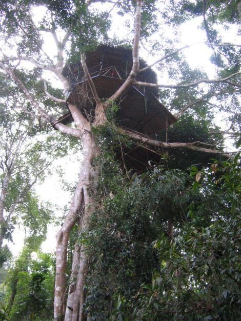 jungle-of-laos