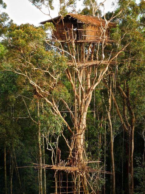 skyscraper-tree-house-at-the-korowai-tribe-southeast-indonesian-province-of-papua