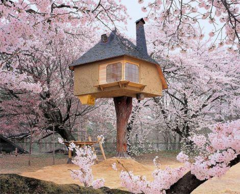 teahouse-tetsu-treehouse-in-hokuto-city-japan