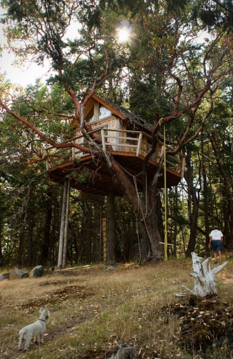 treehouse-on-henry-island