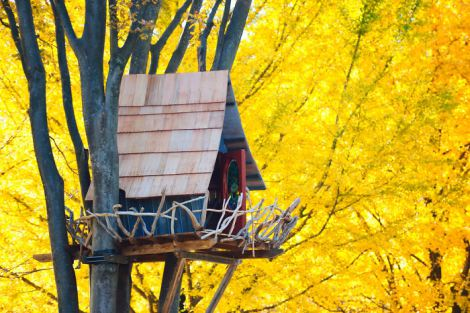 treehouse-surrounded-by-yellow-tokyo-japan